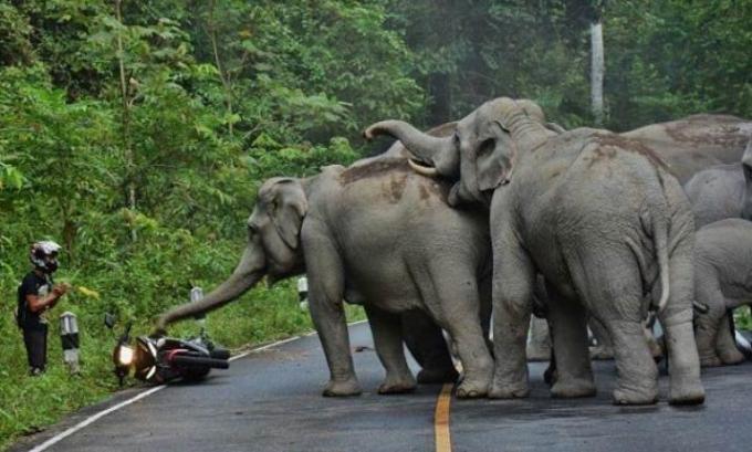 IndiaTv68d8ed_elephants